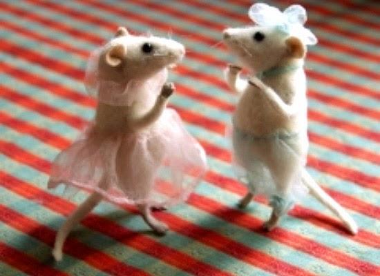 Ratos dançando