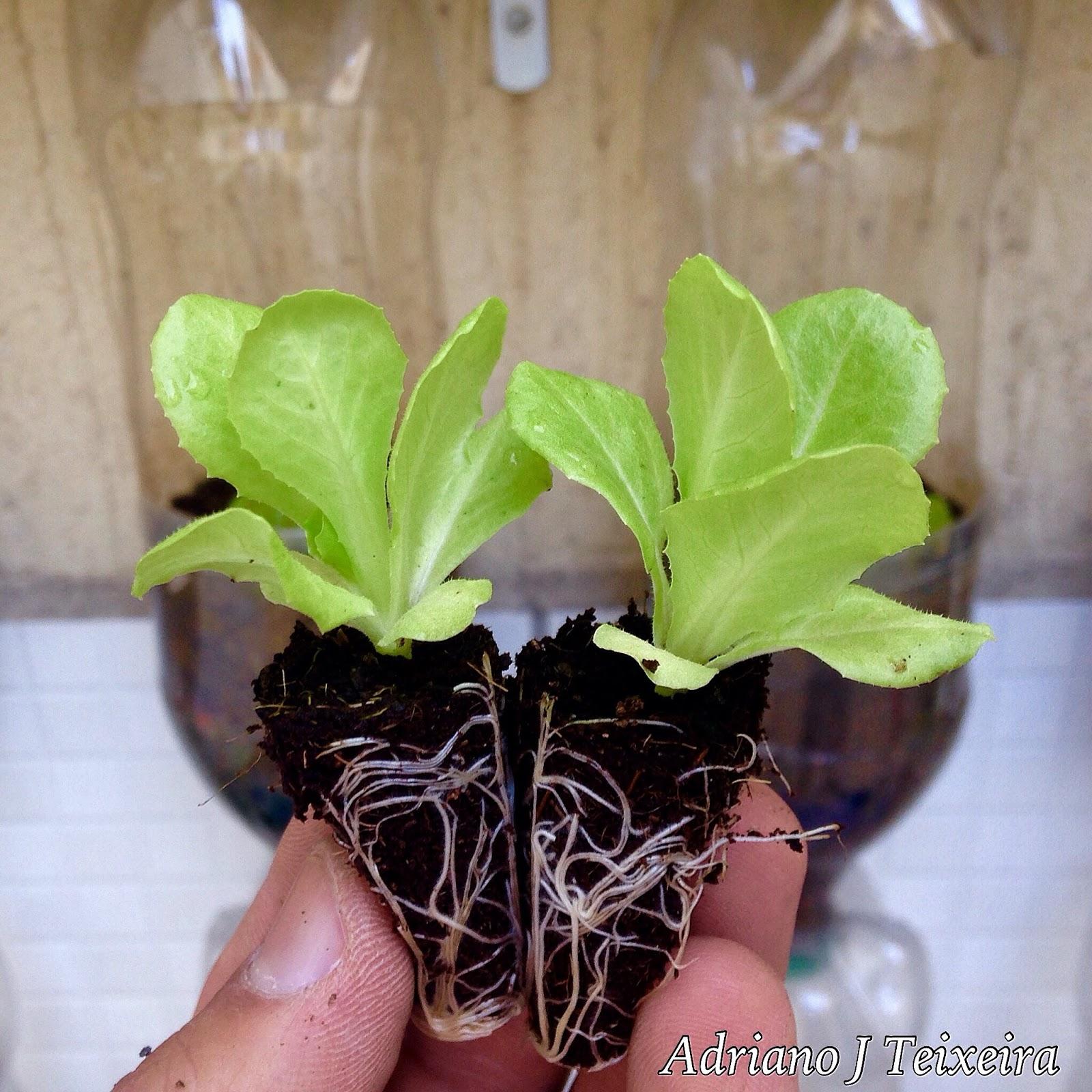 Amado Mundo das Plantas : Horta Vertical em Garrafa Pet LG15