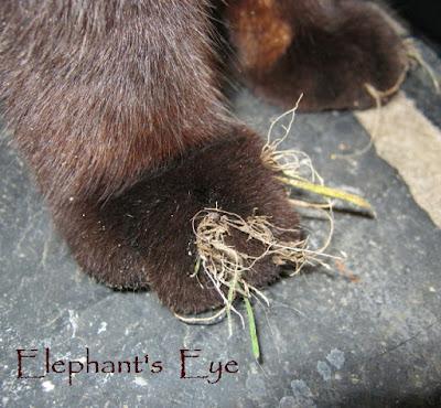 Gardener's paws in 2011