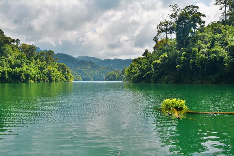 dżungla tajlandia