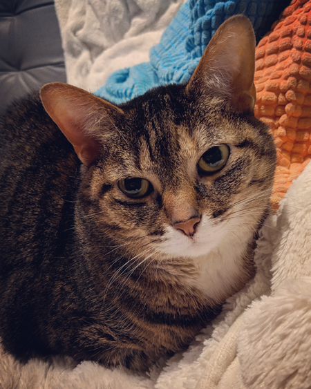 image of Sophie the Torbie Cat sitting on the couch beside me, looking sassy