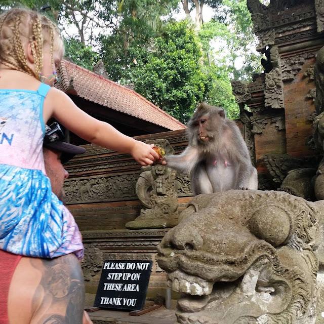 foto kera di ubud monkey forest