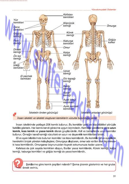 6. Sınıf Fen Bilimleri Tuna Matbaa Yayınları Ders Kitabı Cevapları Sayfa 31