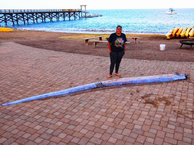 International Fishing News: US: found a monster 18 feet ... Oarfish 56 Ft