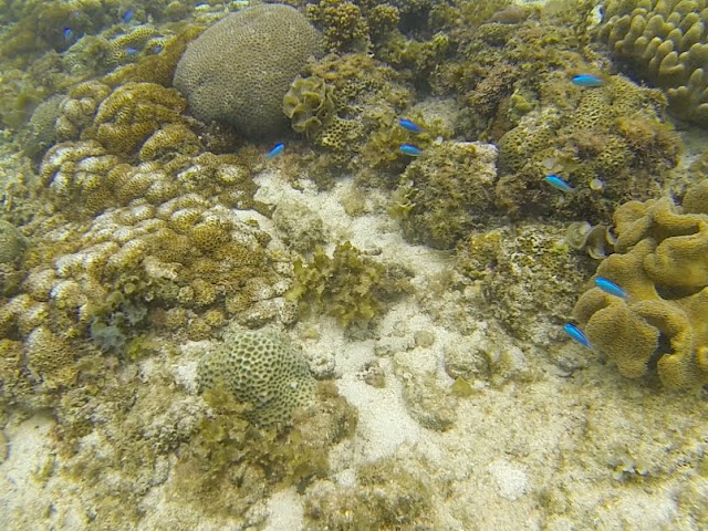 Panagsama Beach Moalboal Coral