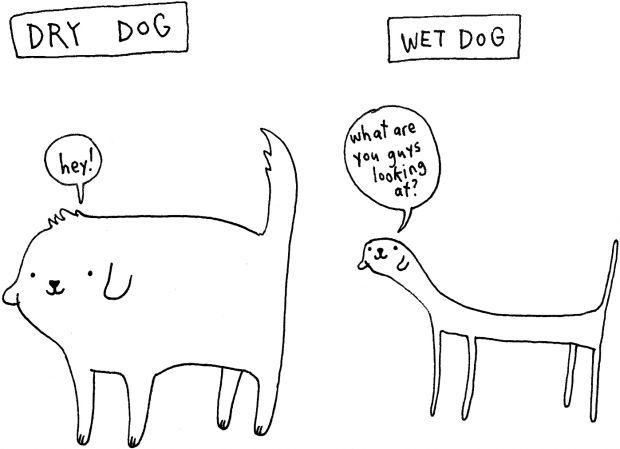 Dry Dog - Wet Dog