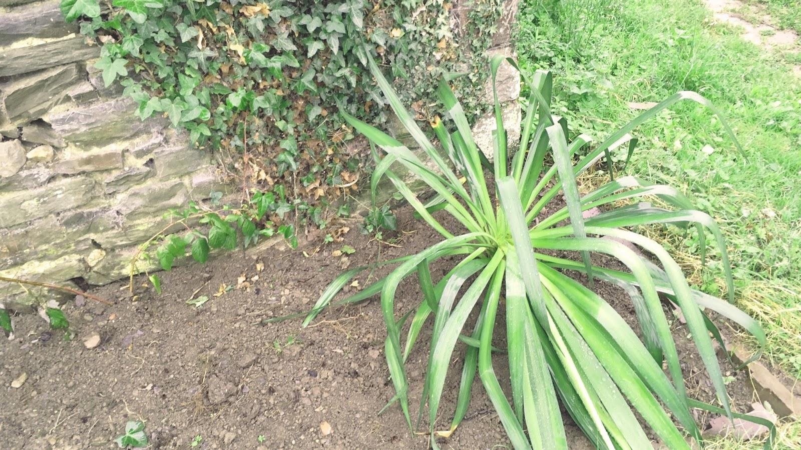garden-plants-outdoor