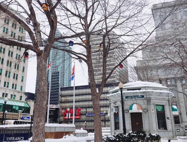 birdhouses in Montréal, Canada
