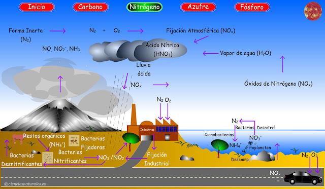 Enlace al Ciclo del Nitrógeno