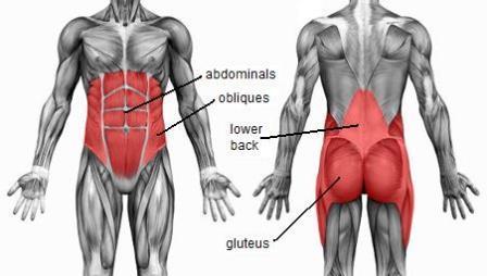 Anatomi dan Fisiologi Core Muscle (Otot Inti) dalam Melatih Otot Perut