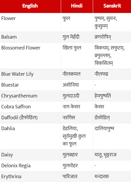 List of Flowers Name - Flowers Name  List