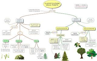 http://www.mappe-scuola.com/2017/02/classificazione-delle-piante.html