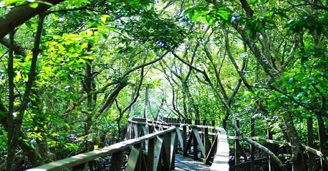Liburan akhir tahun dengan mengunjungi Hutan Bakau adalah solusi tepat bagi kamu yang bosan dengan suasana kota