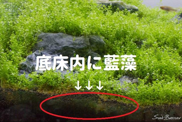 藍藻 食べる