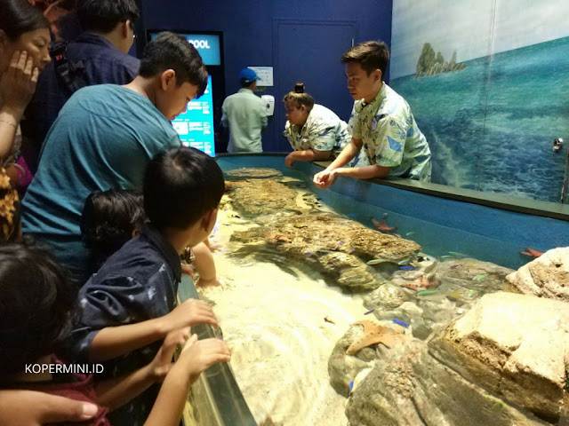 bintang laut di sea aquarium