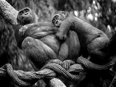 love animals monkey in - photo #25