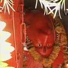 Ulte Hanuman Mandir, Sanwer, Indore