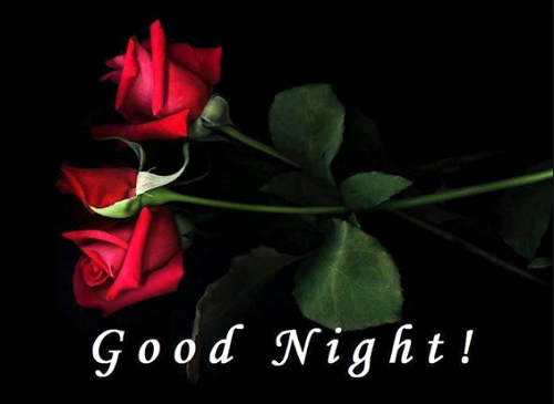 Free Download Good Night Red Rose Flower
