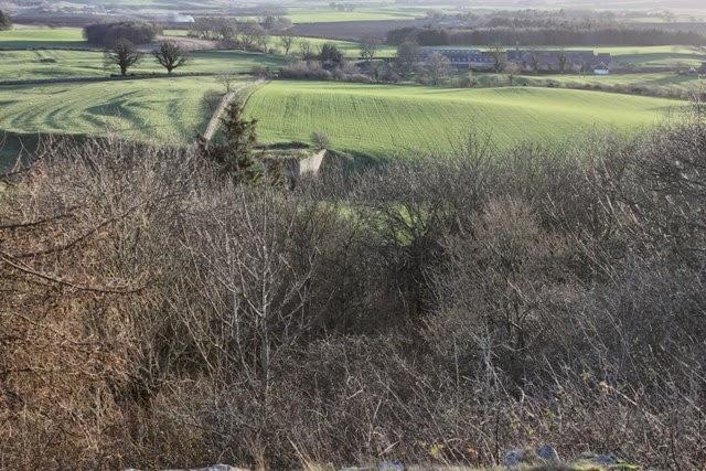 Killy Birder: Spindlestone and Budle Bay   An RSPB Walk