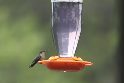 do hummingbirds share well?