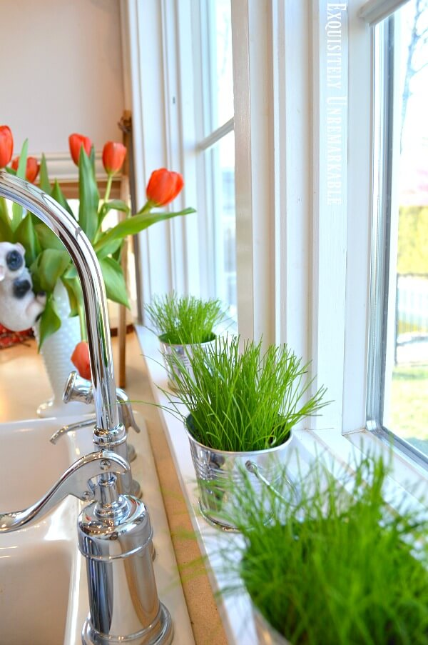 Farmhouse Kitchen Windowsill with grass growing in metal tins
