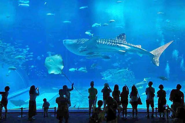 aquarium, Churaumi, people,Okinawa, travel, silhouettes