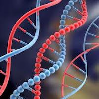 Como fazer um Exame de DNA Para Comprovar Paternidade.