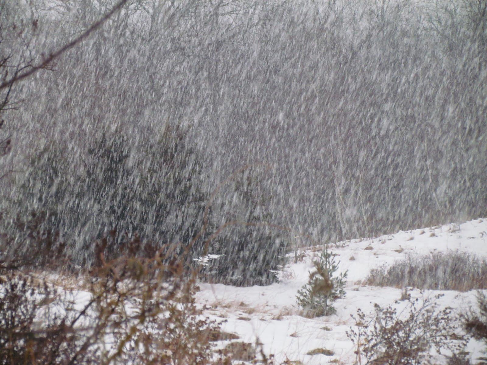 Holy Scribbler Like Rain And Snow