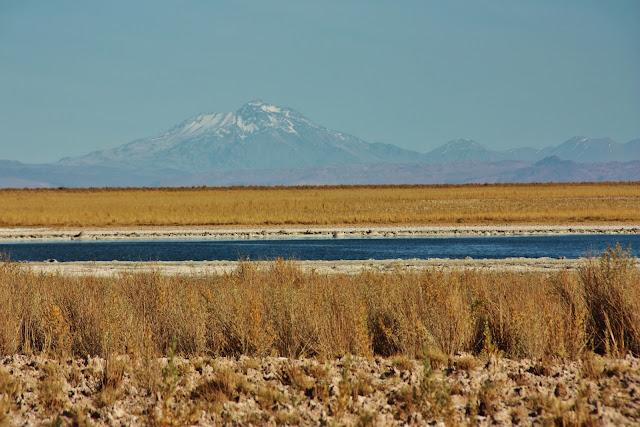 Passeio pela Laguna Céjar, no Deserto do Atacama.