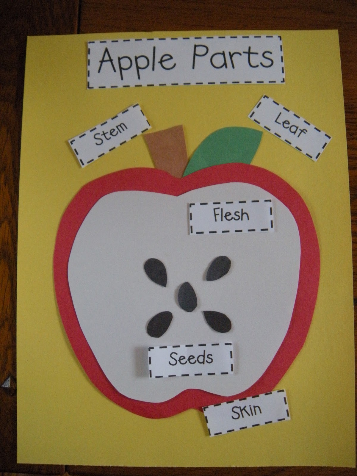 Diagram Of An Apple Worksheet Mitosis And Meiosis Large The Adventures Miss Elisabeth Bushels Fun With Apples