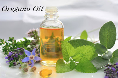 Give A Try To Oregano Oil