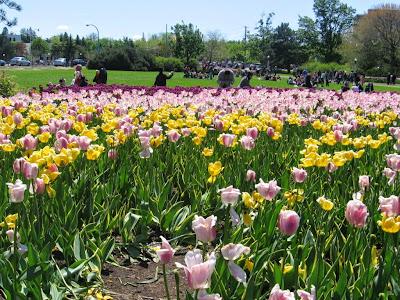 voyage-canada-ottawa-festival-tulipe