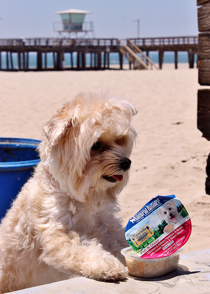 Explore every day and embrace your dog's wildside with #NaturalBalance Delectable Delights® single serve wet food for dogs! (AD)