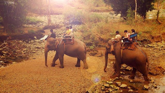 Cưỡi voi qua suối - Ảnh: Pham Van Huong