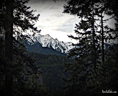 elwha trail view