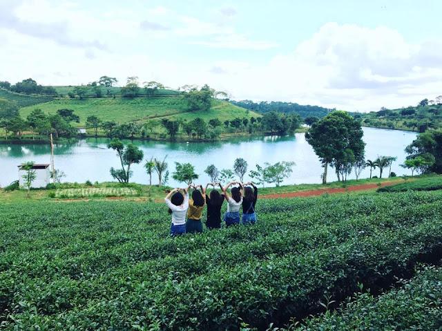 Các bạn trẻ đến với đồi chè Tâm Châu Bảo Lộc để ghi lại những bức ảnh tuyệt đẹp
