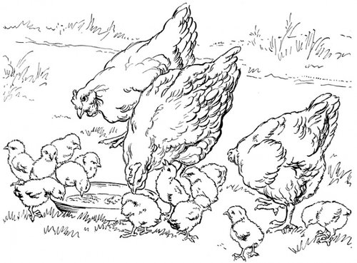 barnyard animal coloring pages | Baby Farm Animals Coloring Pages For Kids >> Disney ...