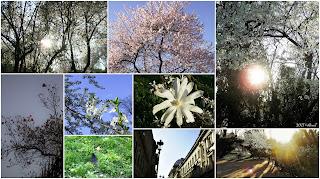 Trees in bloom.