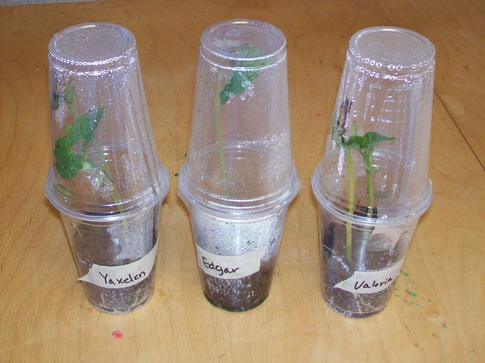 Learning And Teaching With Preschoolers Planting And
