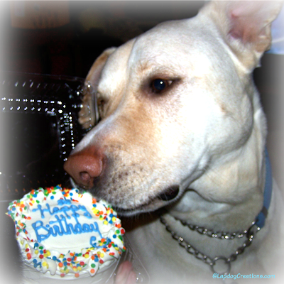 mixed breed rescue dog with birthday cake