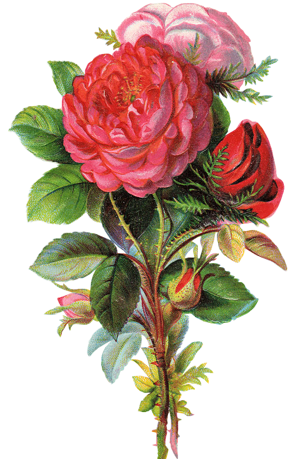 http://3.bp.blogspot.com/-qOK2pW7-H6Y/T04xmIq_MQI/AAAAAAAAMWo/utBHttOs_dw/s1600/ephemera_flowers_08.png