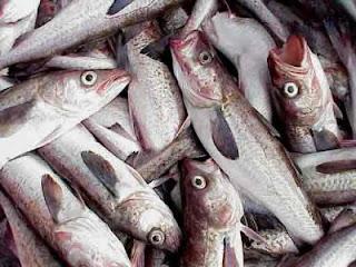 sueño-con-pescado-que-numero-jugar-en-la-loteria