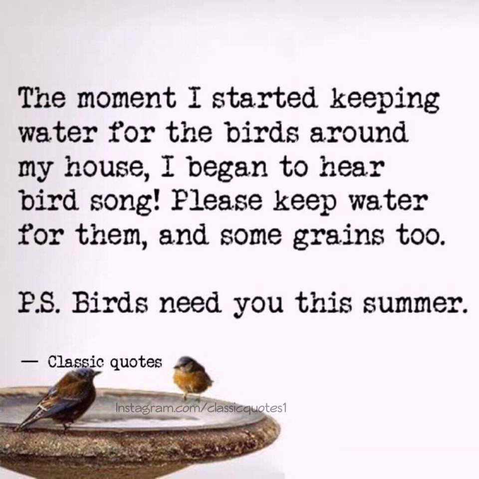 Quotes About Birds | Classic Quotes Countless Birds Starve To Death In Summer Due To