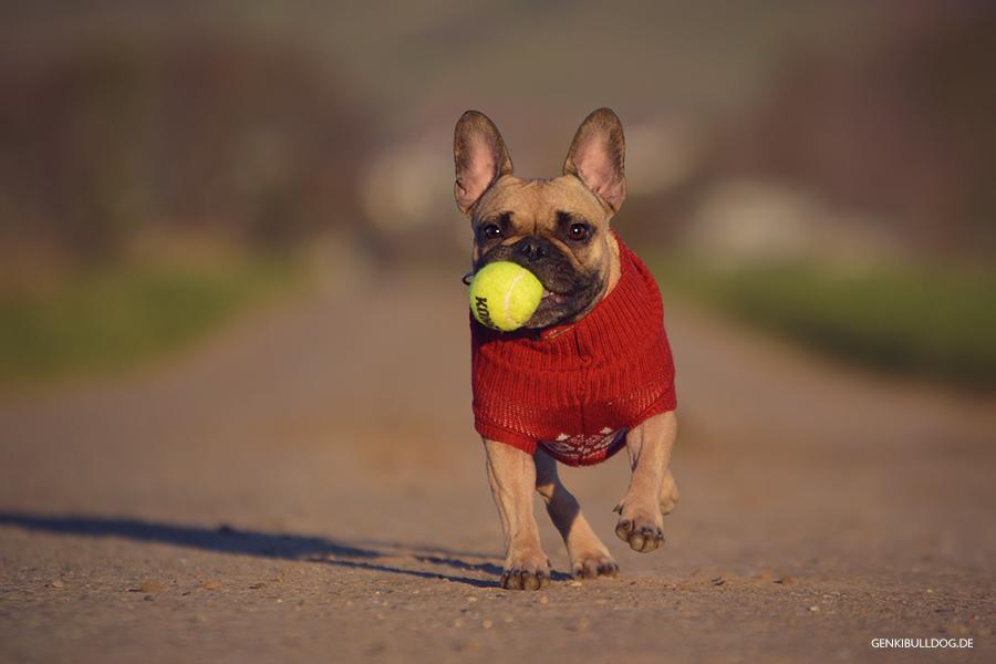 Pullover passend für Französische Bulldogge Bullymullover Anziehsachen