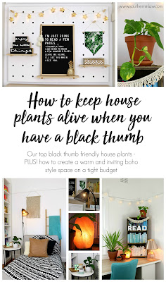 House Plants That Are Hard to Kill + My Boho Inspired Office Theme