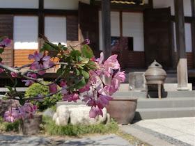 光則寺のカイドウ