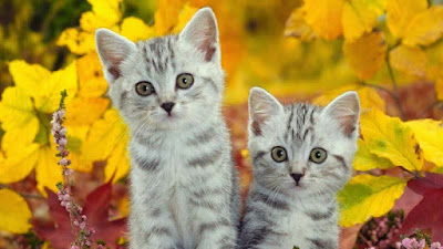 cat-wallpaper-preview-yellow-flowers-background
