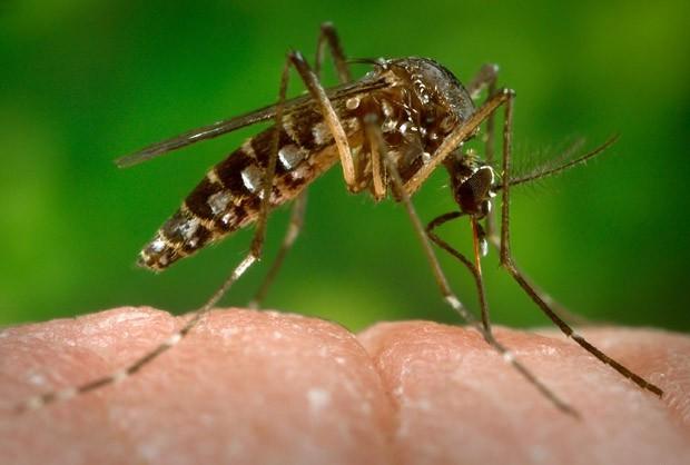 Butantan inicia pesquisa para descobrir remédios contra o vírus zika