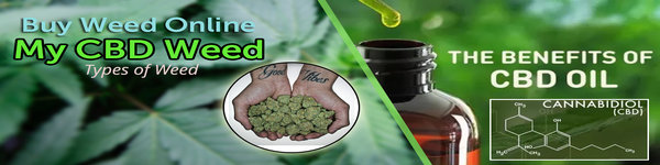 Buy CBD Oil Online with MYCBDweed