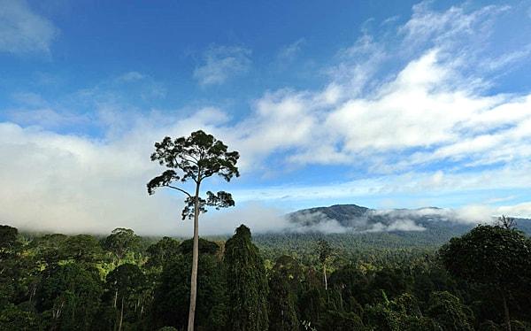 Sabah Maliau Basin